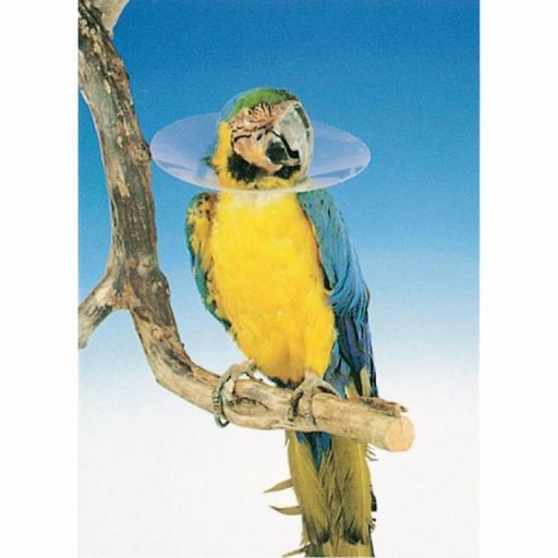 COLLAR Isabelino Aves Buster