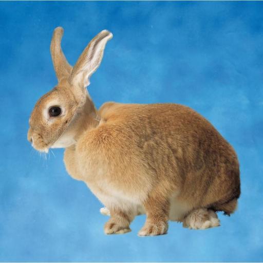 Collar Isabelino para Conejos y Roedores 10 unidades