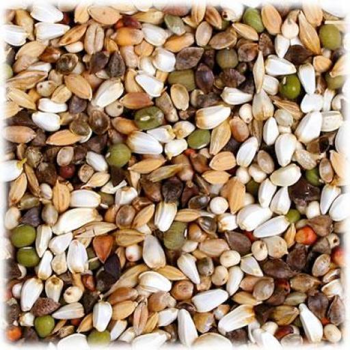Semillas para germinar [1]
